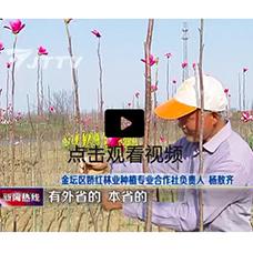 http://www.jtjhly.com/honghuayulan/jiaohong/1239.html